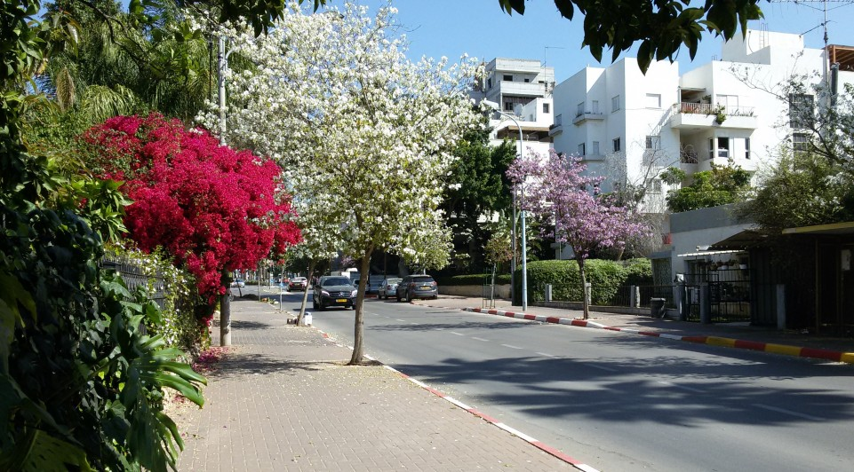Rehovot in bloom